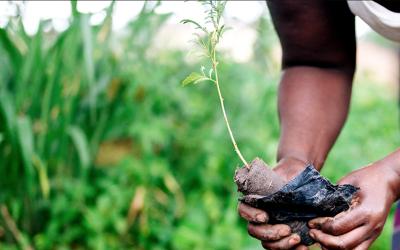 Plant et træ med 2BM